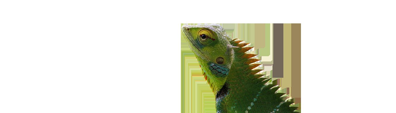 studio grafico foto di un camaleonte